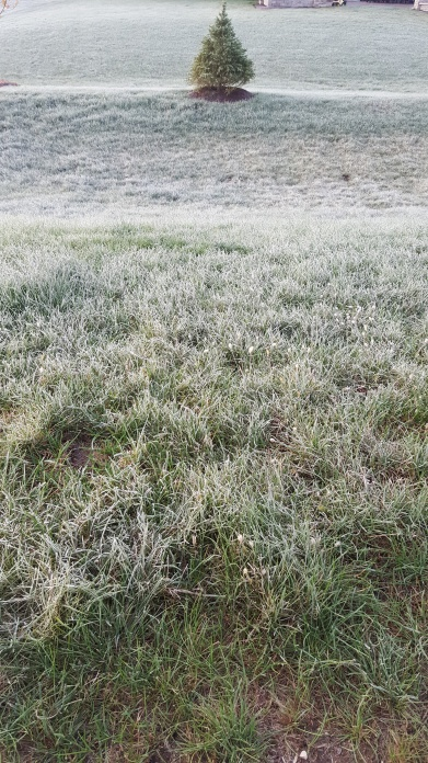 My first frost!!!