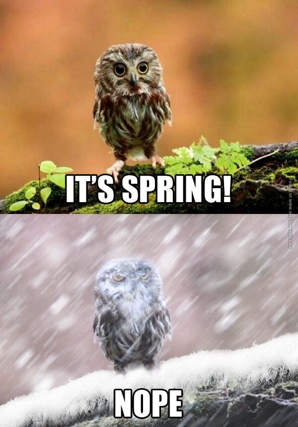It is spring NOPE